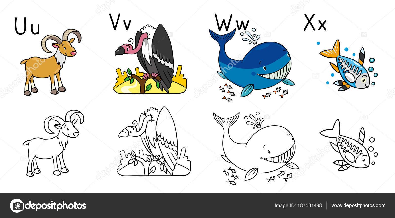 Alfabeto de animales o Abc. Libro para colorear — Archivo Imágenes ...