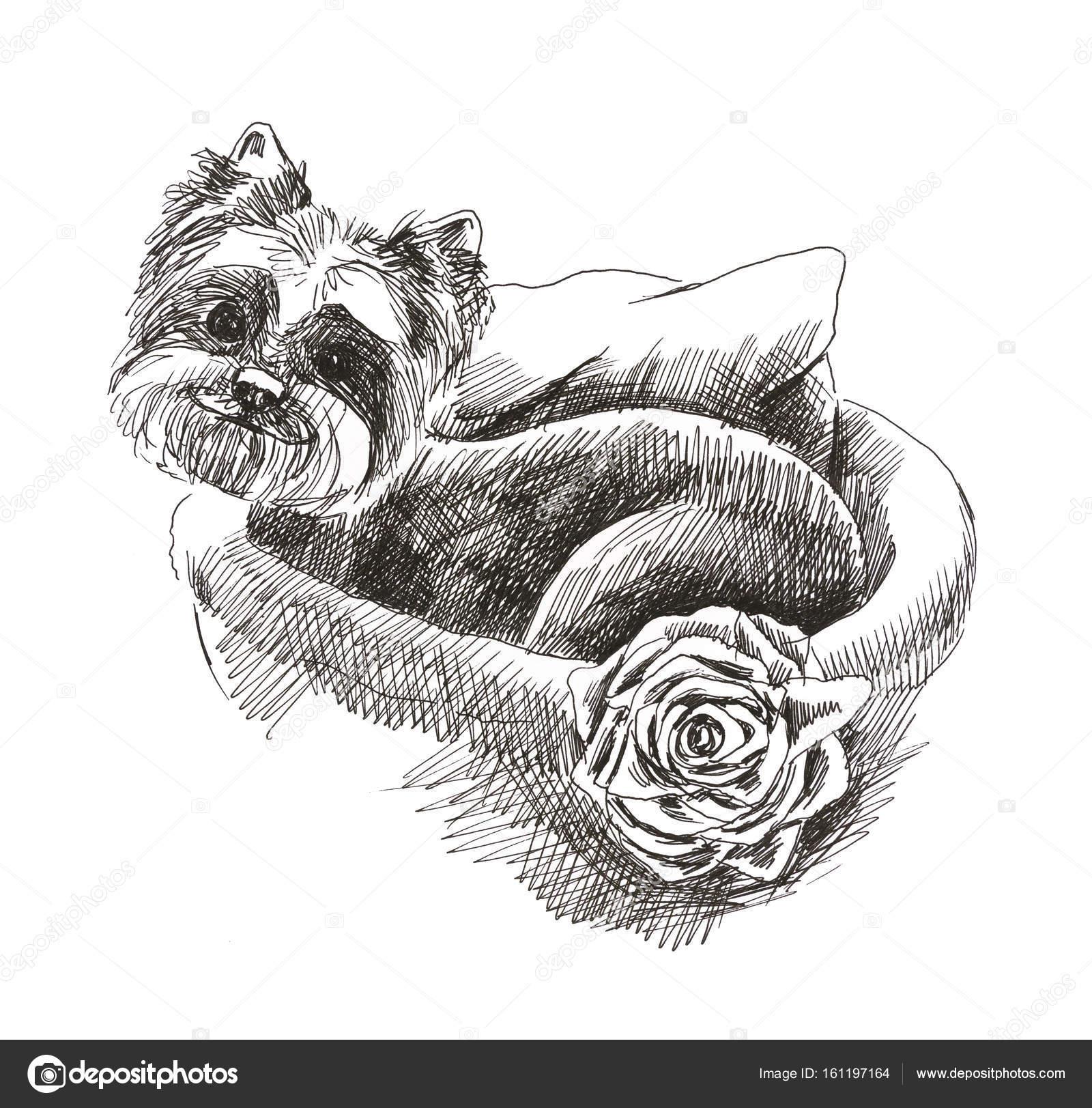 veľký péro malý pes