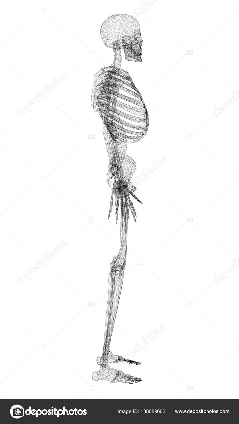 Esqueleto humano poligonal — Archivo Imágenes Vectoriales © Slim3D1 ...