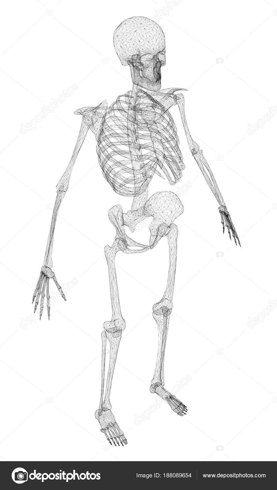 Esqueleto humano poligonal — Vector de stock © Slim3D1 #188089654
