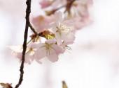 jemné květy jarního stromu. měkké selektivní zaměření