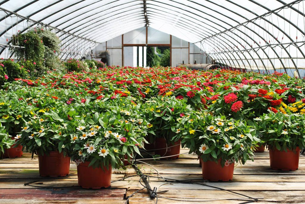 Greenhouse Potted Plants with a Watering System