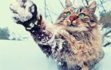 Playful cat outdoor in snowy winter