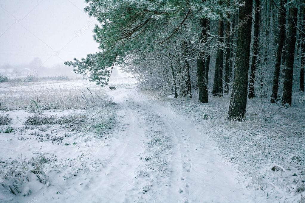 Snowy road along field and forest
