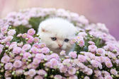 Photo kitten sitting in flowers