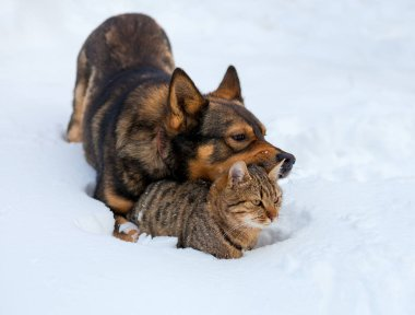 Cat and dog playing together on the snow