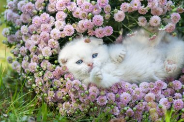 kitten lying on his back in flowers