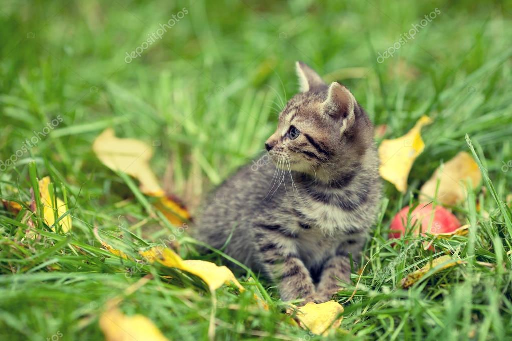 kitten sitting on the grass