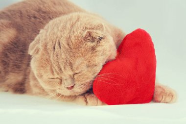 cat sleeping on red heart-shaped pillow