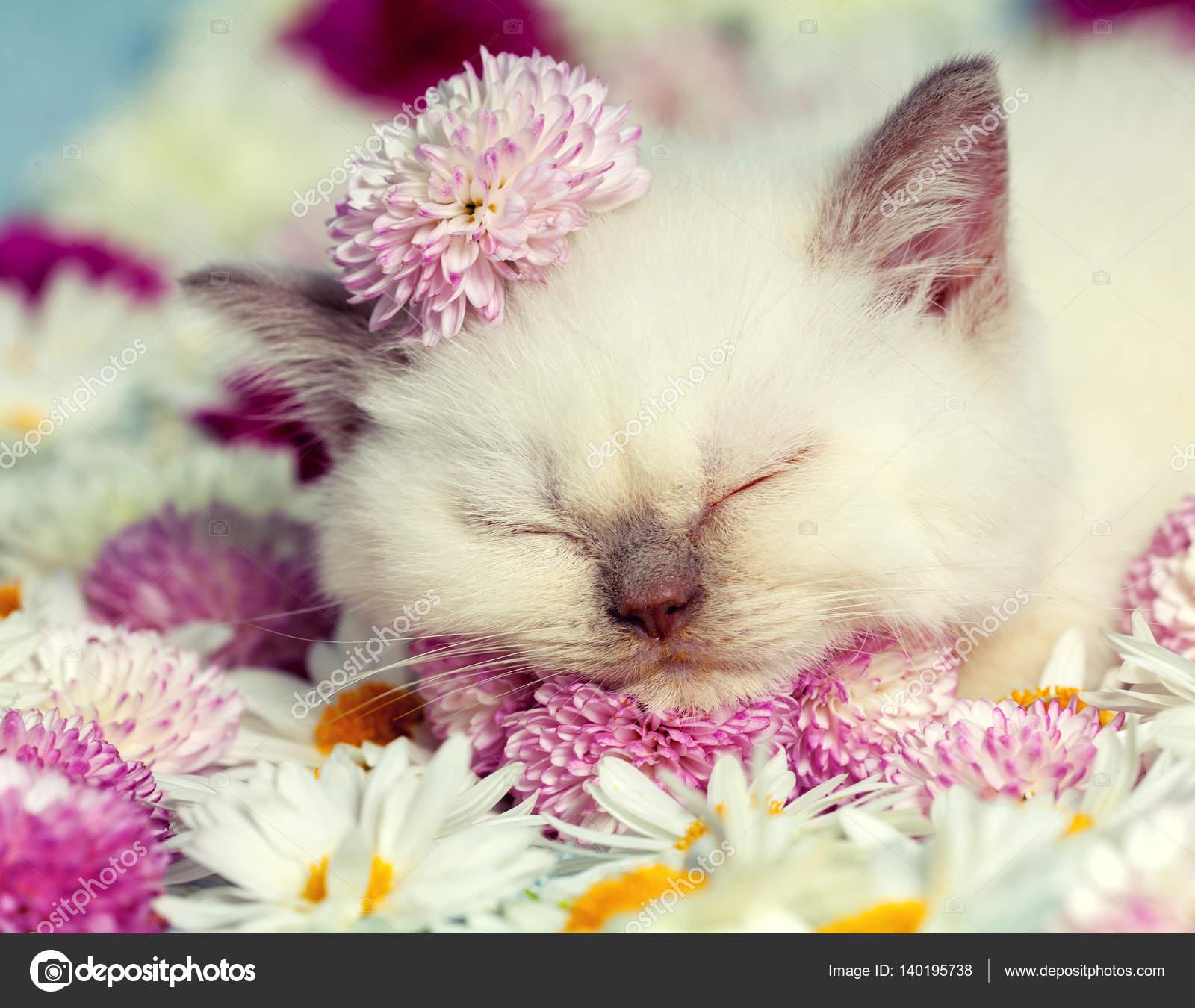 котенок с цветами картинка