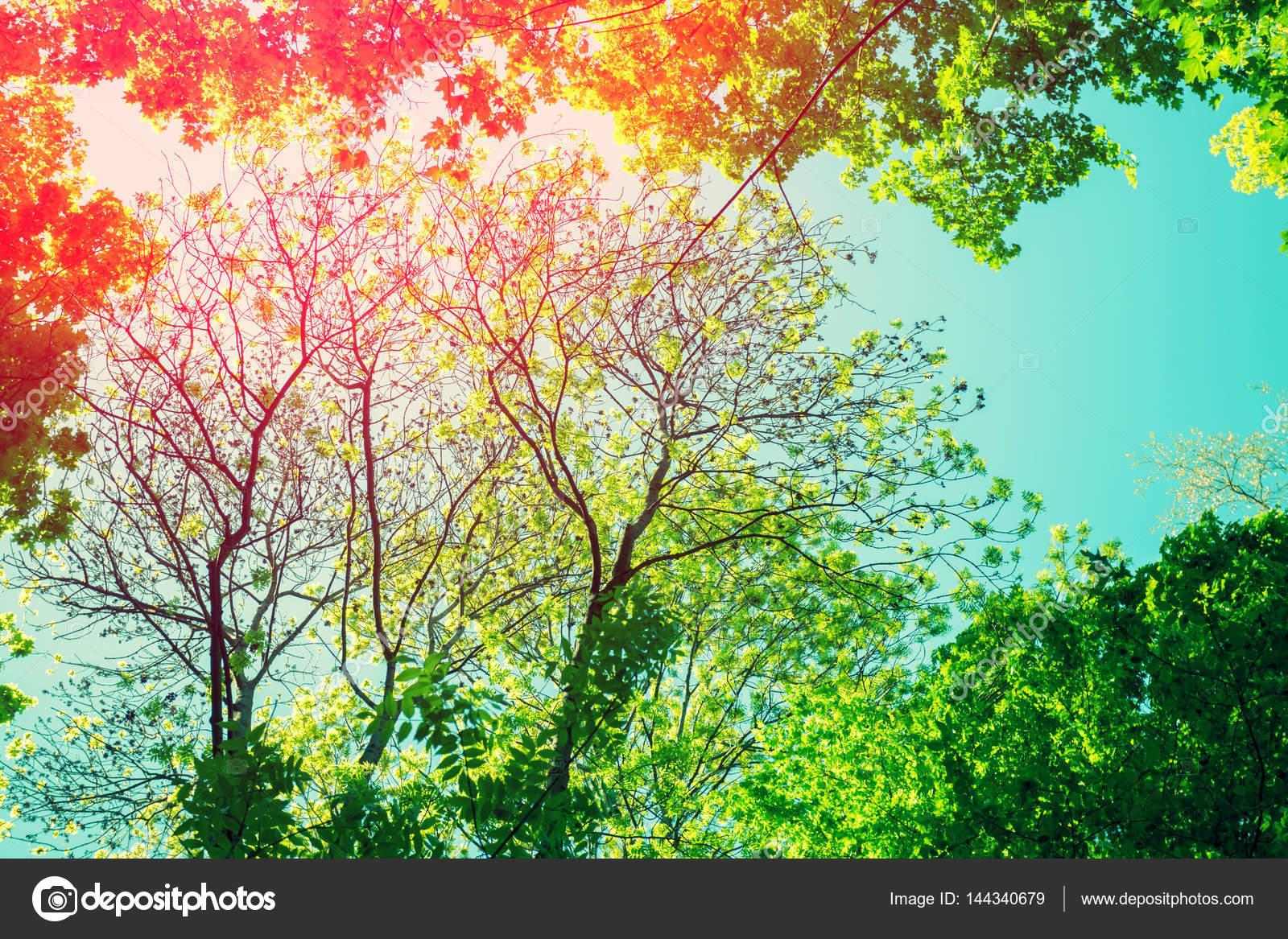Rahmen von Baum-Brunch — Stockfoto © vvvita #144340679