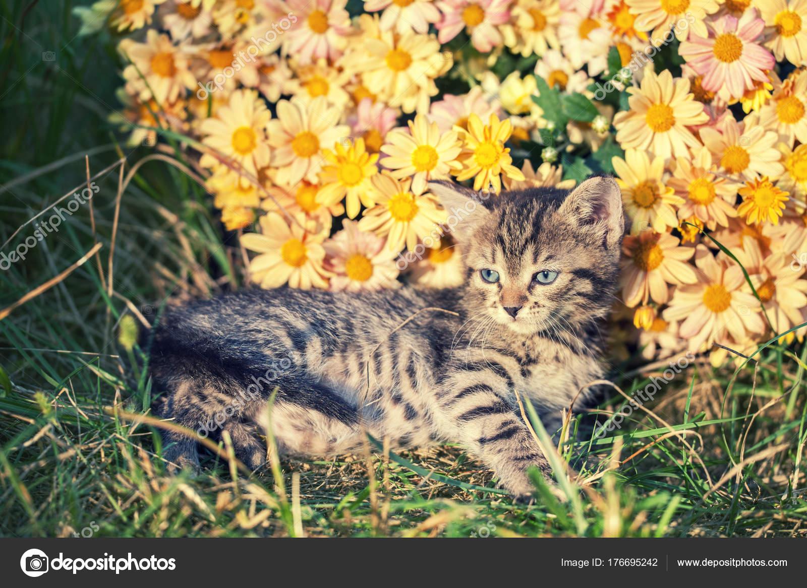 mladí dospívající jíst kočička