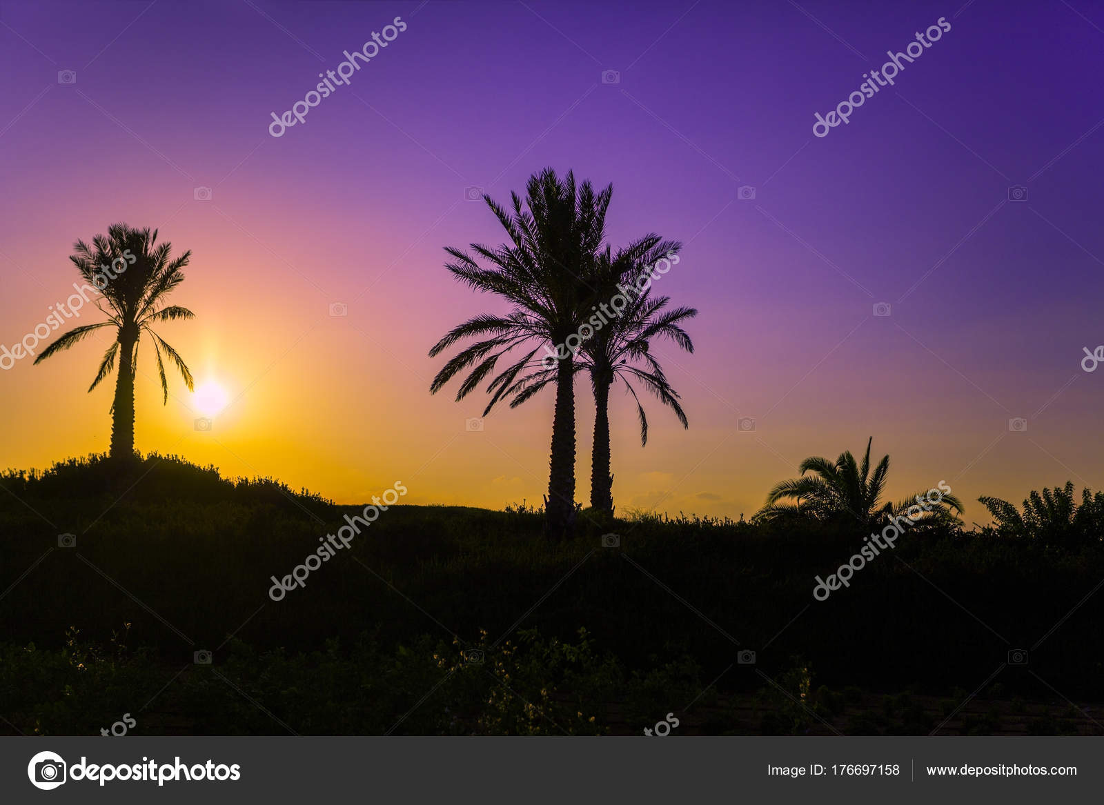 Západ palm beach dating