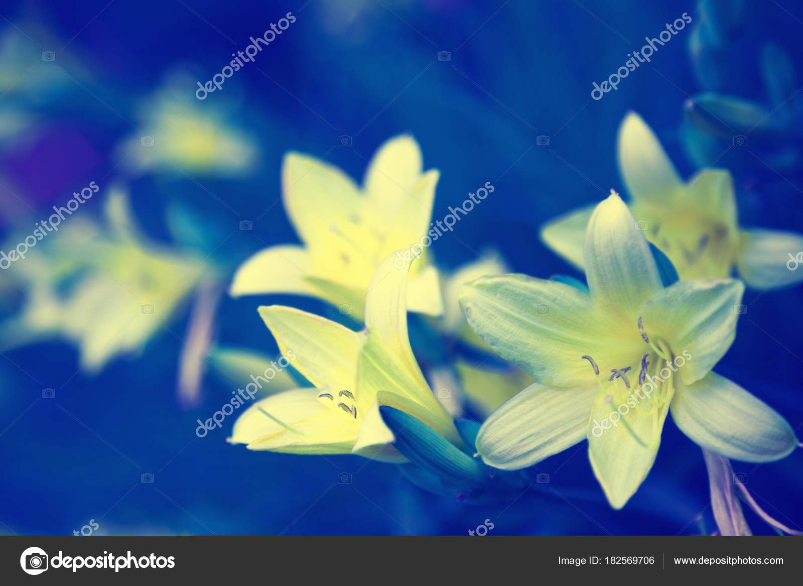Vintage wild lily flowers natural background stock photo vvvita vintage wild lily flowers natural background stock photo izmirmasajfo Gallery