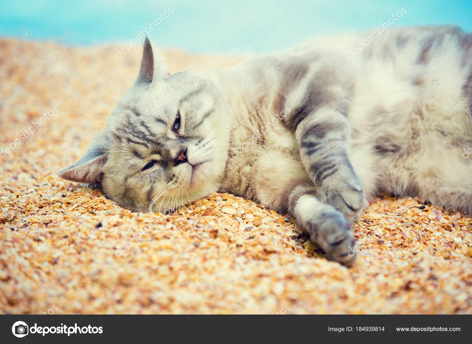 Pláž velká kočička