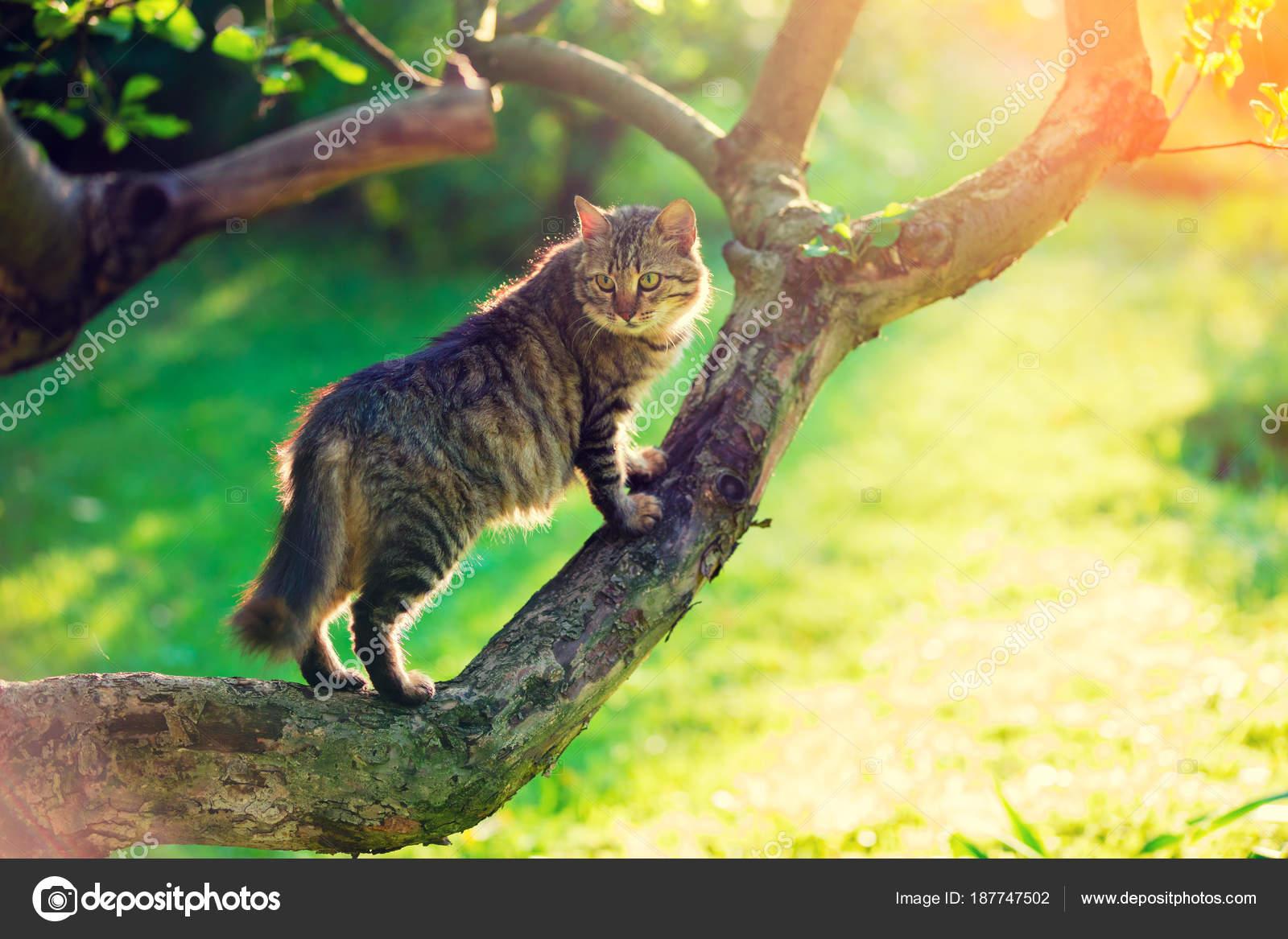 Lindo Gato Sienta Sobre Una Rama Árbol Jardín — Fotos de Stock ...