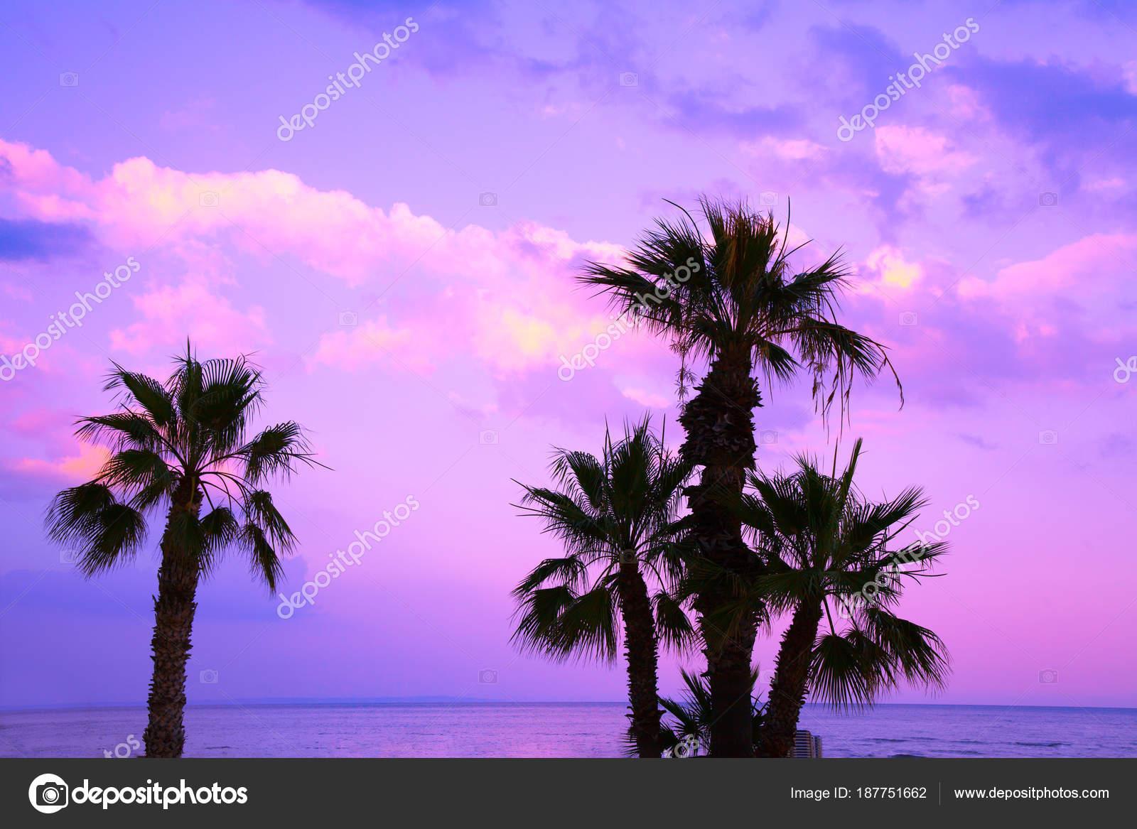 Purple Sunset With Palm Trees Palm Trees Purple Sunset Sky Tropical Evening Landscape Beautiful Nature Stock Photo C Vvvita 187751662