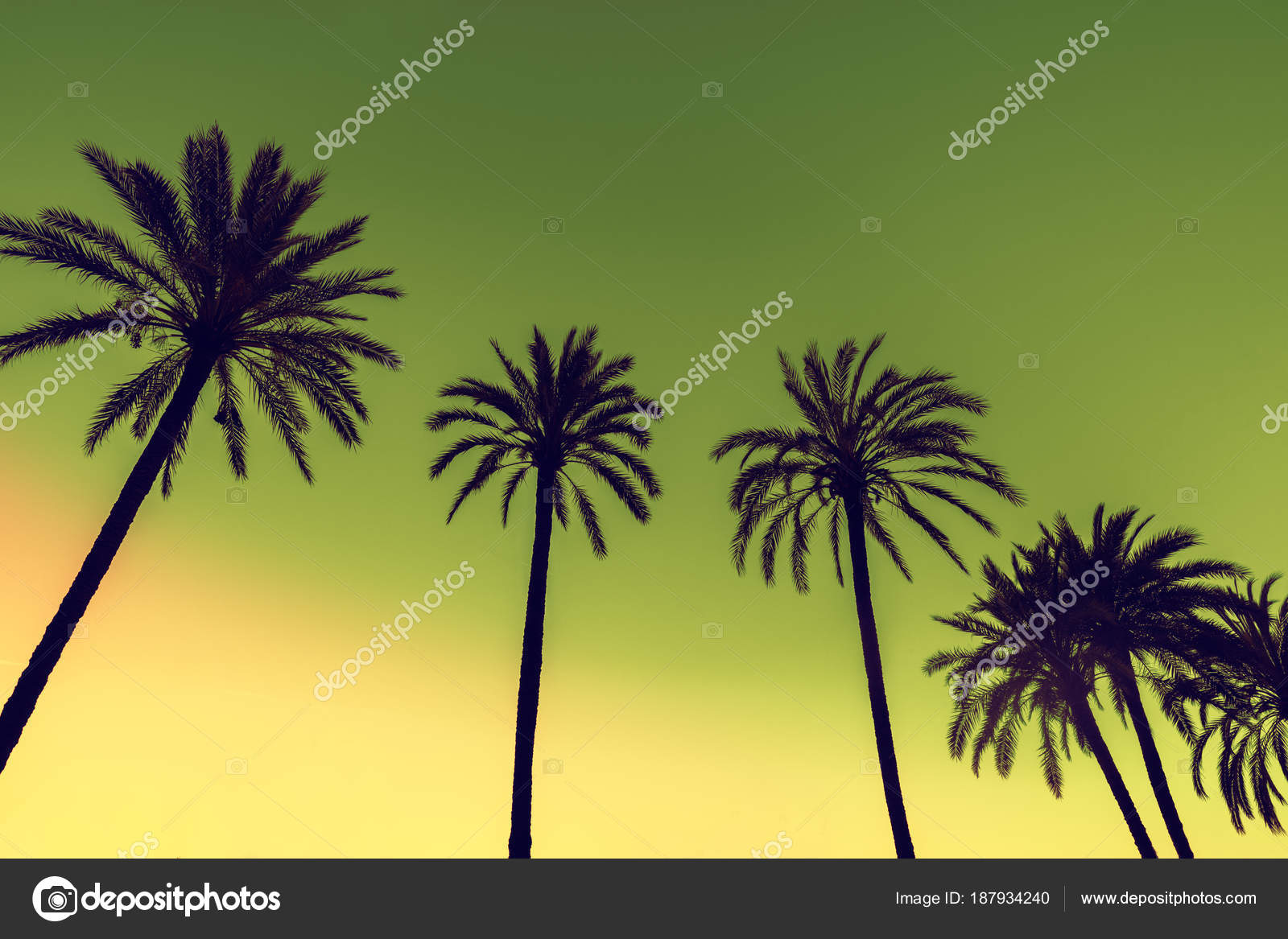 Row Tropic Palm Trees Sunset Sky Gradient Color Silhouette Deep ...