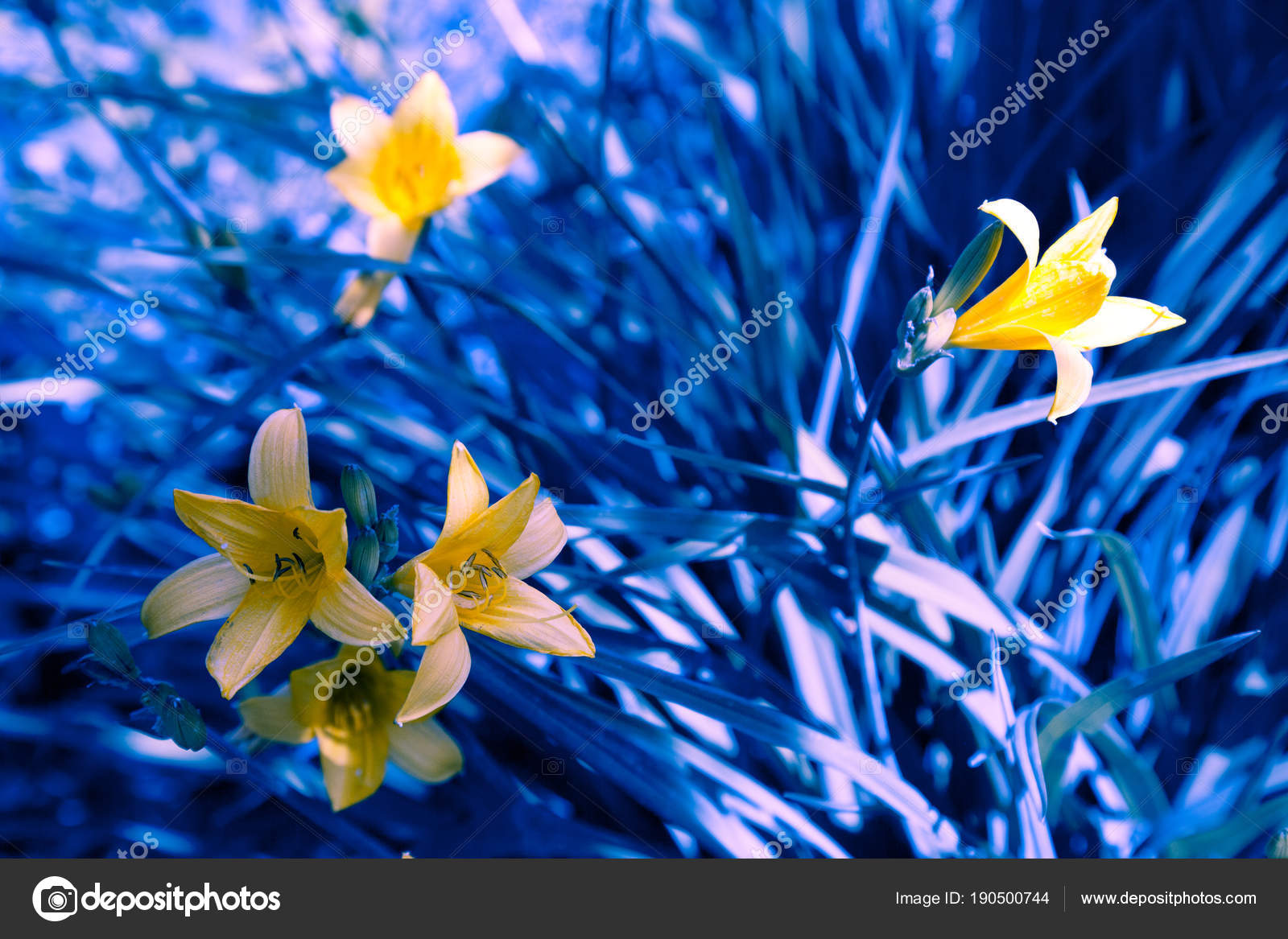 Vintage Wild Lily Flowers Natural Background Stock Photo Vvvita