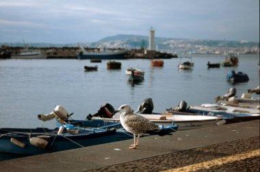 Gabbiano sulla bancina del porto di Portici (vicino Napoli - Italia)