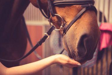 Girl feeding her horse in a barn.