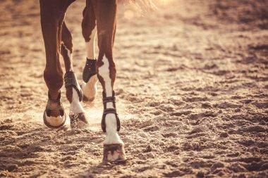 Horse legs running in sunset