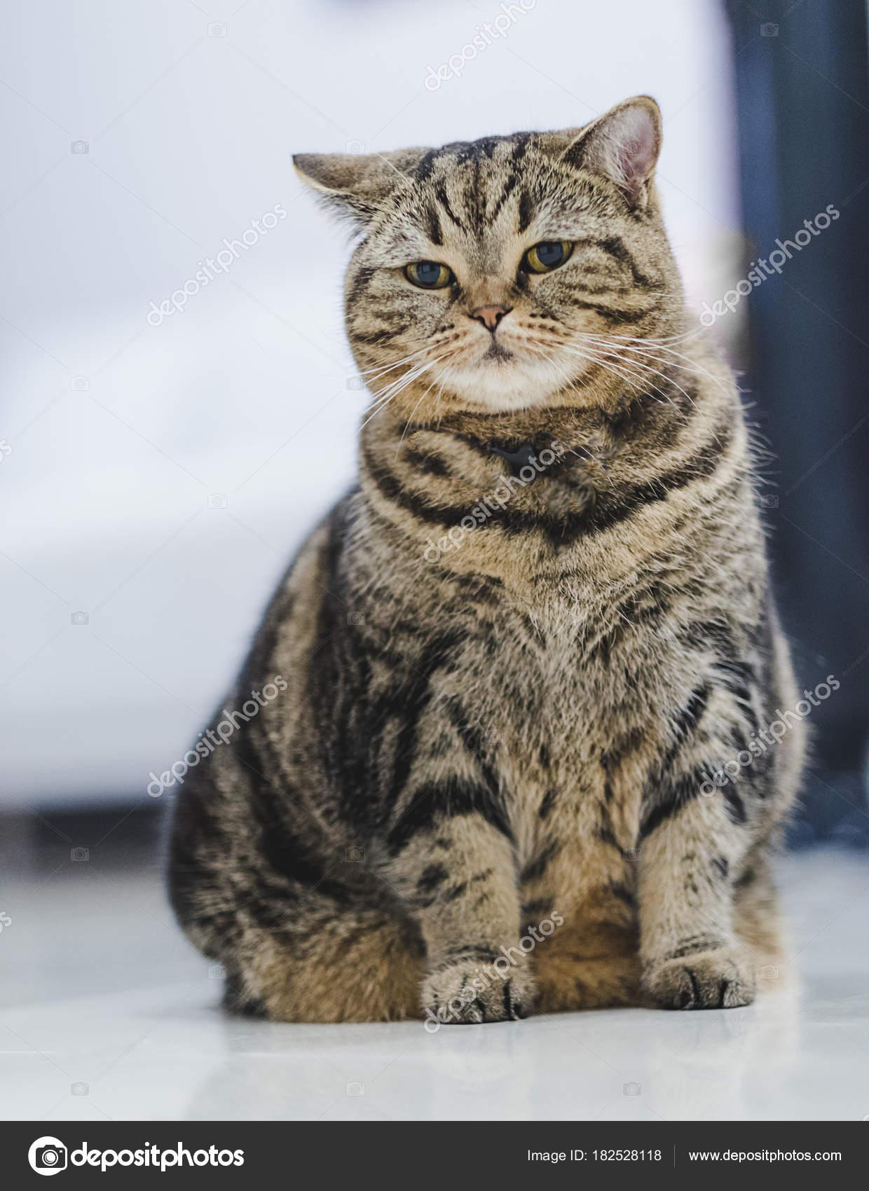 obrázky tlustá kočička horké lesbičky v hd