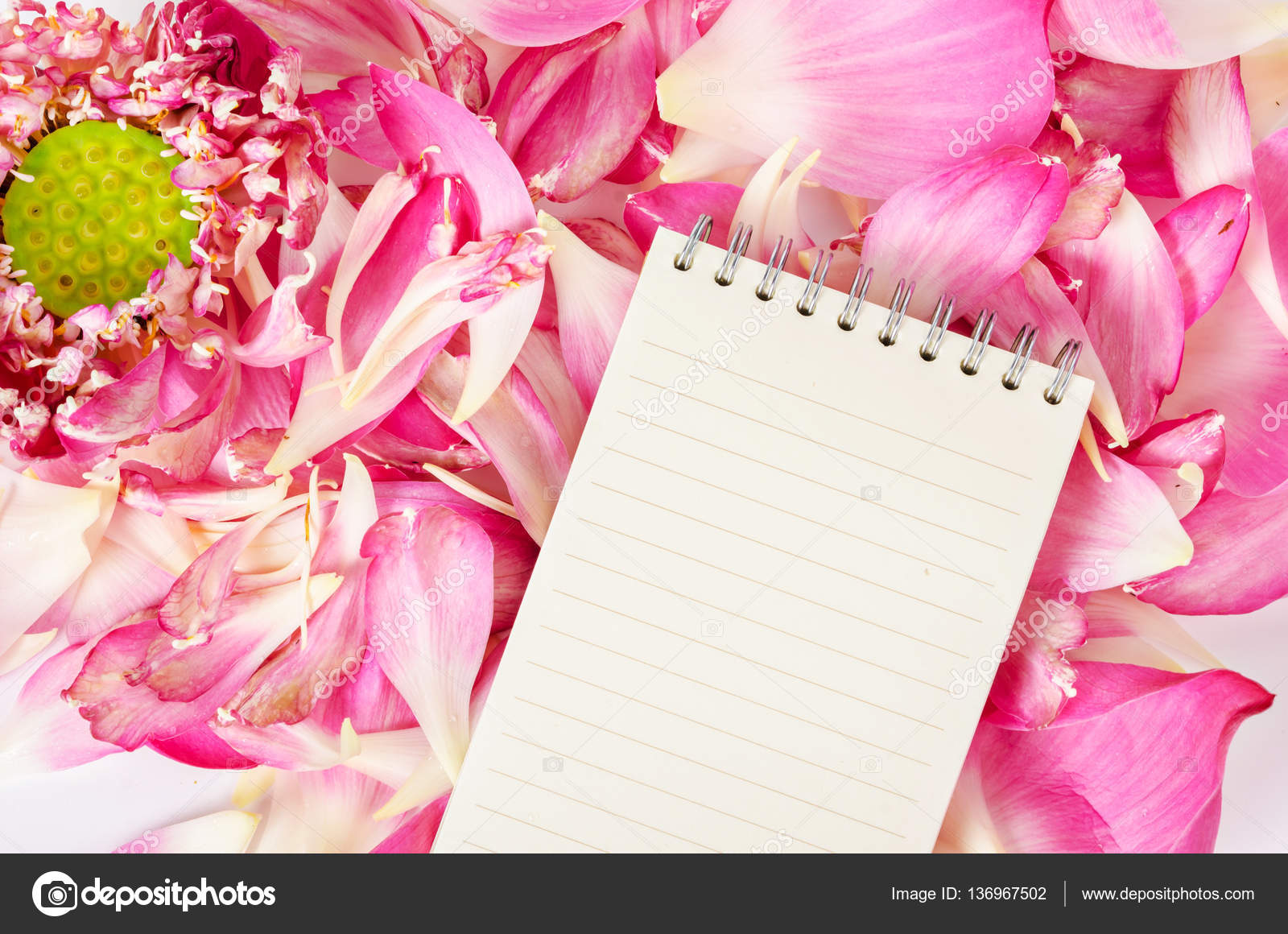 Open blank diary on blooming pink lotus flower stock photo open blank diary on blooming pink lotus flower stock photo izmirmasajfo