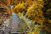 Dobrodružná stezka na podzim v lesích Slovenského ráje na Slovensku