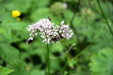 detail of meadow flowering flower with bees