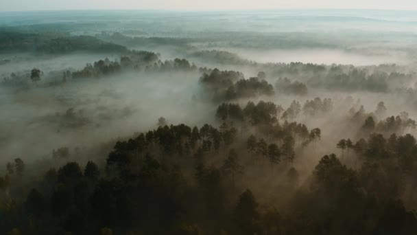 Légi kilátás a nyár köd erdő kora reggel