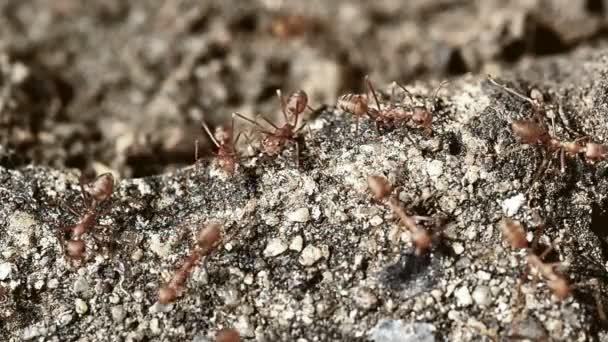 mravenci v akci
