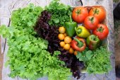 Organic fruits and vegetables in the basket
