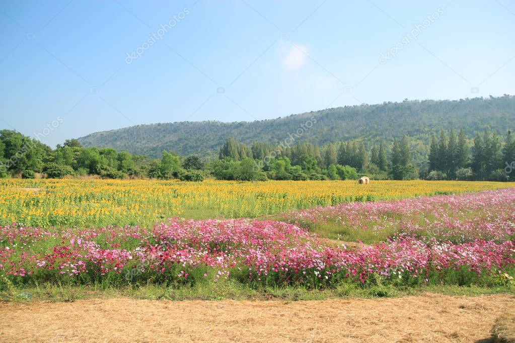 Landscape flower field.
