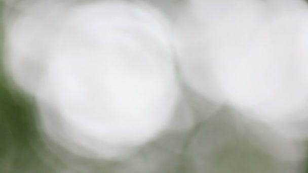 Zelená rozostření bokeh nebo rozostření pozadí