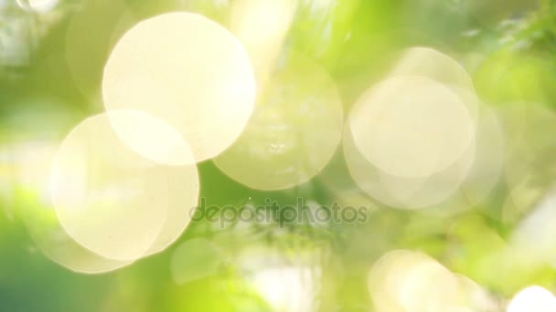 Defocus green leaves bokeh light, used for background.
