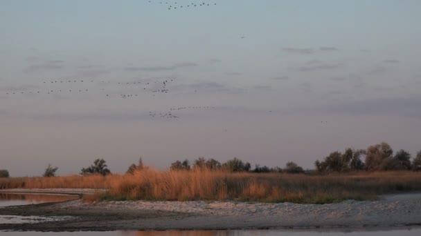 Vogelschwärme fliegen am Himmel über salzige Seen, Wanderungen von Wildenten oder Gänsen