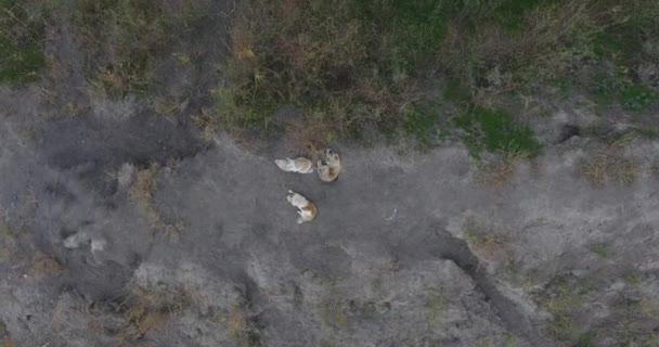 Pouliční psi bezdomovců Mutt sedět na cestě mezi suché trávy, zatoulaná zvířata