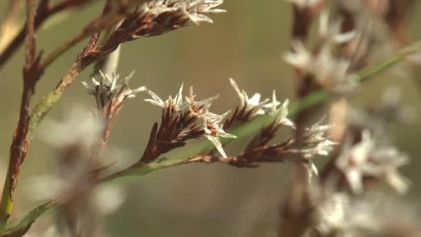 Bílé květy s ostnatými okvětními lístky, houpající se v letním větru mezi divokým polem