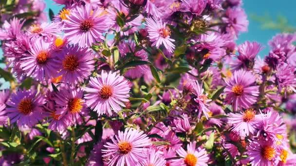 virágok kert 4k