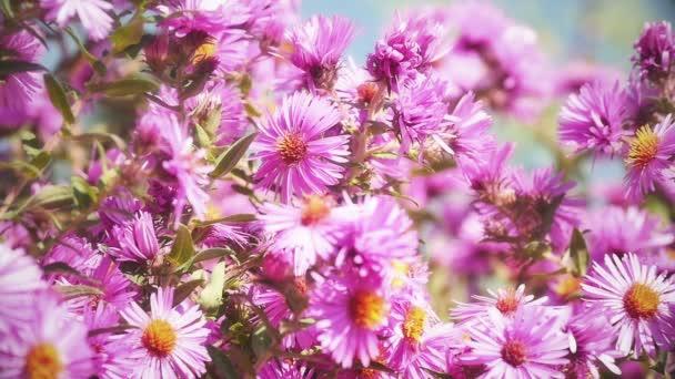květiny v zahradě zpomalené