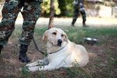Voják armády se psem