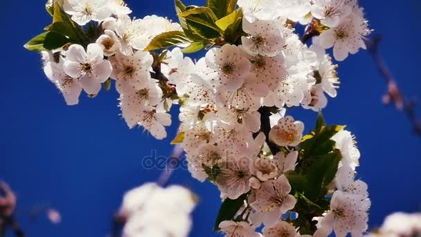 Jarní kvetoucí strom s květinami