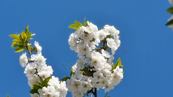 Tavaszi virágfa virágokkal