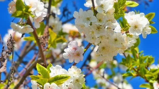 Jarní Kvetoucí strom s květy