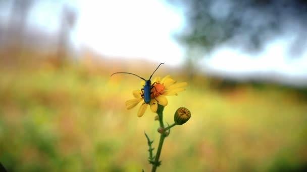 Chyba v žlutý květ