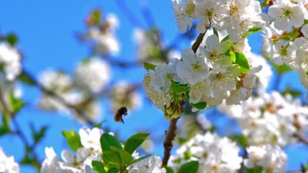 Tavaszi blossom tree virágok 4k