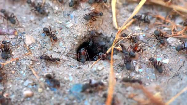 ants in a nest hole 60 fps to 30 fps 4k