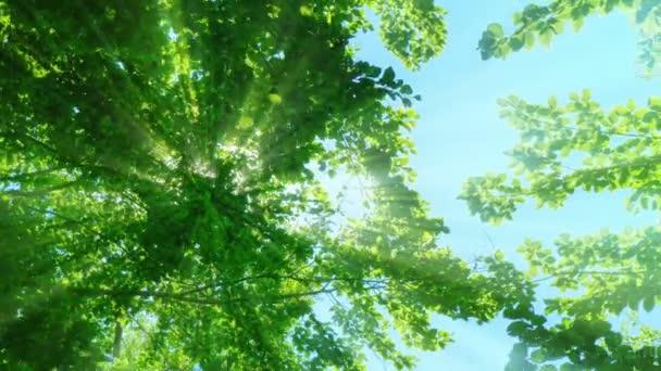Sonnenstrahlen durchdringen Bäume 4k