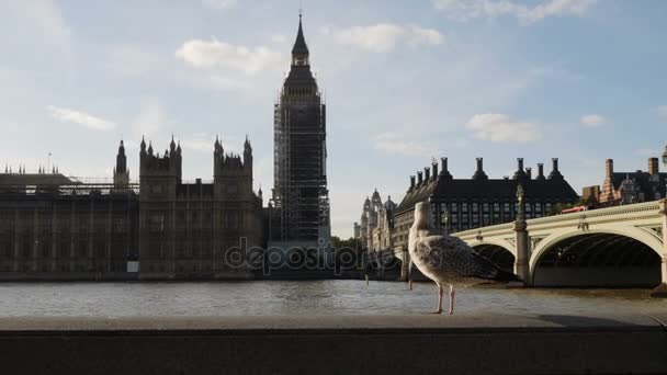 Sliding shot of Big Ben and houses of Parliament during conservation refurbishment from other side of Thames river, Walking seagull in the front, 4k, 2x slow motion
